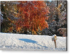 Shadows In The Snow Acrylic Print by Kimberly Little