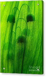 Shadows Acrylic Print by Odon Czintos