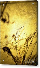 Shadows Acrylic Print by Rossi Love