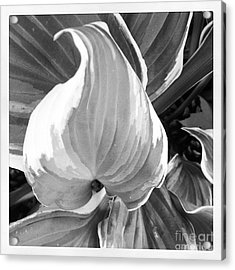 Shape Acrylic Print by Susan Wood