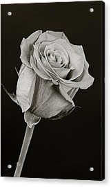 Sharp Rose Black And White Acrylic Print by M K  Miller