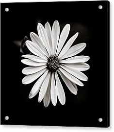 She Loves Me Not Acrylic Print by Anthony Rego