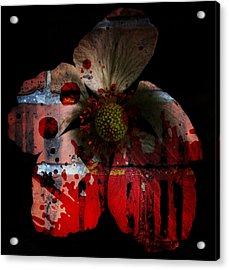 She Loves Me She Loves Me Not Acrylic Print by Empty Wall