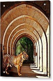 She Waits.... Acrylic Print by Sharon Lisa Clarke