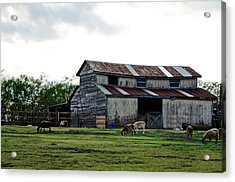 Sheep Barn Acrylic Print by Lisa Moore