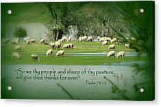 Sheep Grazing Scripture Art Acrylic Print by Cindy Wright