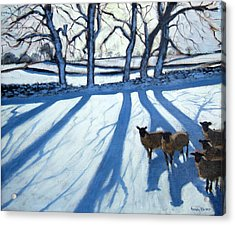 Sheep In Snow Acrylic Print by Andrew Macara