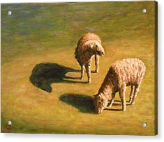 Acrylic Print featuring the painting Sheep Shapes Two  by Joe Bergholm
