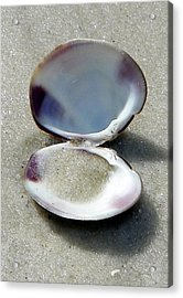 Shell And Sand Acrylic Print by Sheri McLeroy