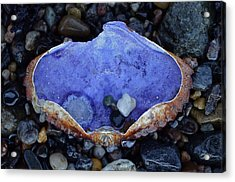 Shell Dish Acrylic Print by Anna Bree