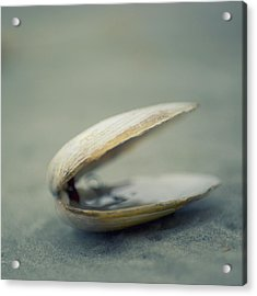 Shell Acrylic Print by Jill Ferry Photography