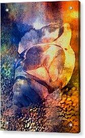 Shell Acrylic Print by Mauro Celotti