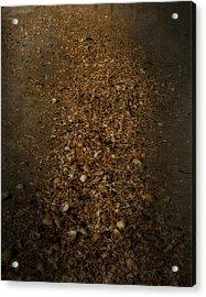Shell Road Acrylic Print by Mario Celzner