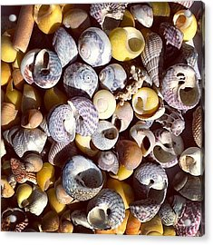 Shells From Brittany Acrylic Print