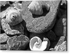 Shells I Acrylic Print by David Rucker