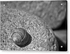 Shells IIi Acrylic Print by David Rucker