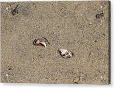 Shells On A Beach Acrylic Print by Rebecca Frank