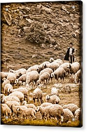 Guzelyurt, Turkey - Shepherd Acrylic Print