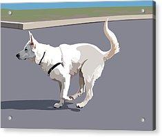 Shepherd Sprint Acrylic Print by Kris Hackleman