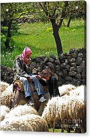 shepherds in Golan Acrylic Print by Issam Hajjar
