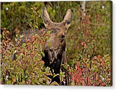 She's Got The Look   Acrylic Print by Eric  Nelson