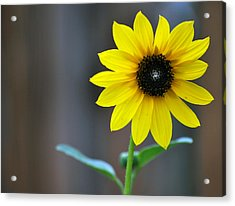 Acrylic Print featuring the photograph Shine by Amee Cave
