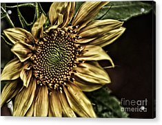 Shinning On You Acrylic Print by Tamera James