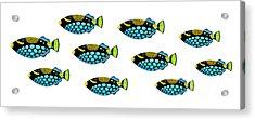 Shoal Of Clown Triggerfish  Acrylic Print by Opas Chotiphantawanon