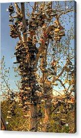 Shoe Tree Acrylic Print by Lori Kimbel
