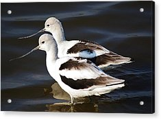 Shore Birds Acrylic Print by Paulette Thomas