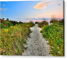 Shoreline Path To View Morris Island Lighthouse Acrylic Print by Jenny Ellen Photography