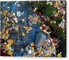 Shorelines - Campbell Creek Acrylic Print