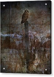Short Eared Owl Acrylic Print by Empty Wall