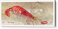 Acrylic Print featuring the painting Shrimp With Red Shell by Anne Beverley-Stamps