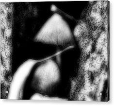 Shroom Magic Acrylic Print by Mimulux patricia no No