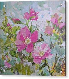 Shrub Roses Acrylic Print by Robin Birrell