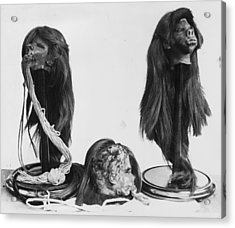 Shrunken Heads Acrylic Print by Kirby