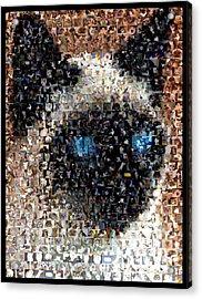 Siamese Cat Mosaic Acrylic Print by Paul Van Scott