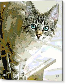 Siamese Mix Kitten Acrylic Print by Dorothy Walker