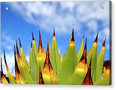Side View Of Cactus On Blue Sky Acrylic Print