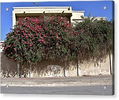 Sidewalk Florae In Doha Acrylic Print by David Ritsema