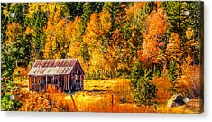 Sierra Nevada Aspen Fall Colors With Rustic Barn Acrylic Print by Scott McGuire