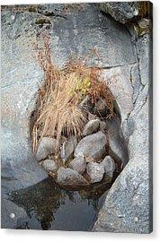 Sierra Nevada Forest 2 Acrylic Print
