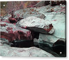 Sierra Nevada Forest Acrylic Print
