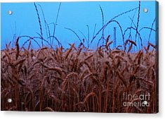 Sign Of The Times Acrylic Print by Lisa Holmgreen