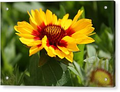 Acrylic Print featuring the photograph Signs Of Summer by Robin Regan