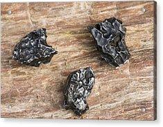 Sikhote-alin Meteorite Fragments Acrylic Print by Dirk Wiersma