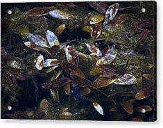 Silent Fall Acrylic Print by Ron Jones