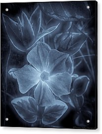 Silent Lucidity Acrylic Print by Victoria Ashley
