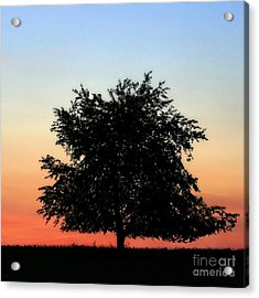 Make People Happy  Square Photograph Of Tree Silhouette Against A Colorful Summer Sky Acrylic Print